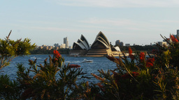sydney opera house and callistemon Footage