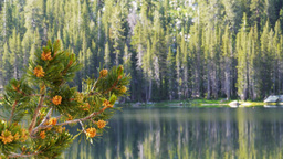 lake tenaya pines Footage