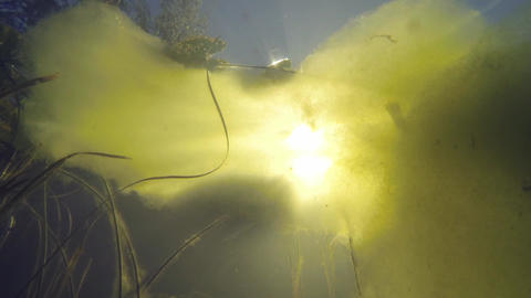 Underwater shot of light green algae with sun beams passing through a floating l Footage