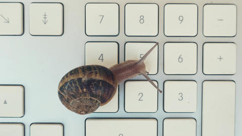 Snail over a keyboard Footage