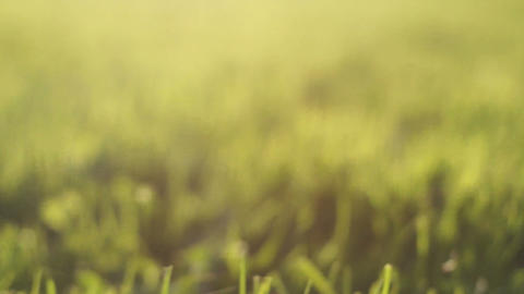 A Little Adventure Throuth The Green Grass, Animal Pov stock footage
