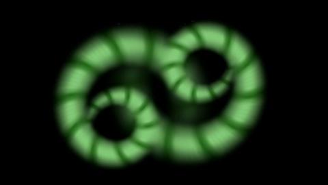 Snake and nematode,earthworm Stock Video Footage