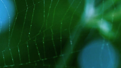 spiderweb macro Stock Video Footage