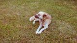 DOG Footage