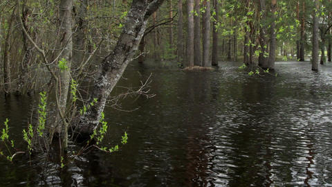 forest in water Stock Video Footage