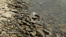 Waves on Rocky Shore Stock Video Footage