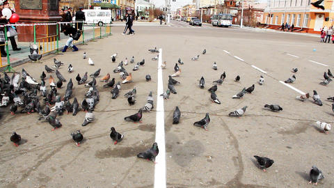 Pigeons feeding in city square Stock Video Footage