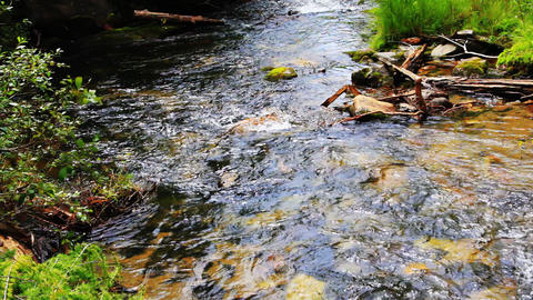 Close-up of the bank mountain river with pure wate Stock Video Footage