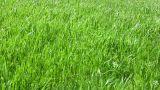 Grass 2 Footage