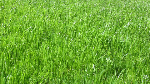 Grass 2 Stock Video Footage