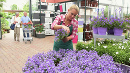Female Garden Center Assistant Helping Senior Customer Couple To Choose Flower P stock footage