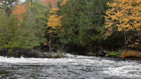 Colorful autumn forest on a riverside of Oxtongue river Footage