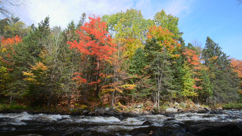 Rich colors of an autumn forest on a stony riverside Footage