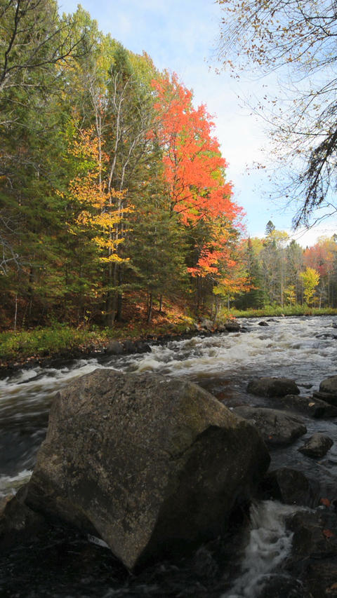 Vertical video of an autumn forest on a stony riverside Footage