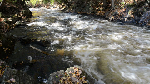 A small foamed river flows through sunny stony riverbed Footage