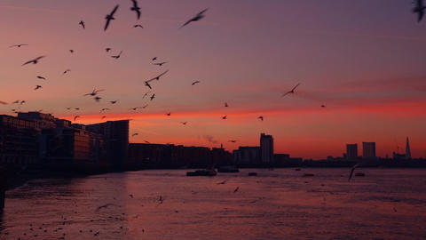 Sunset And A Flock Of Seaguls stock footage