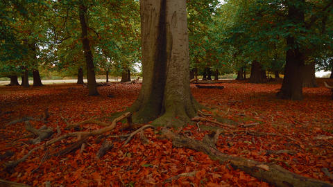 Wide Angle Shot of an Autumnal Park Footage