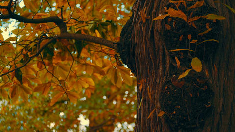 Close-up Shot of an Autumnal Park Footage