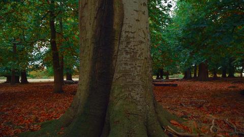 Crane Shot of an Autumnal Park Footage