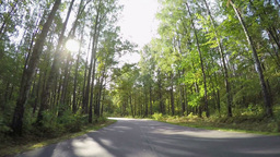 Driving Through Autumn Forest Road stock footage