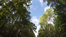 fast driving through autumn forest road Footage