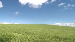 白い雲が浮かぶ青空の下風になびく広い草原 Footage