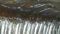 堰を流れ落ちる桜の花びら Footage