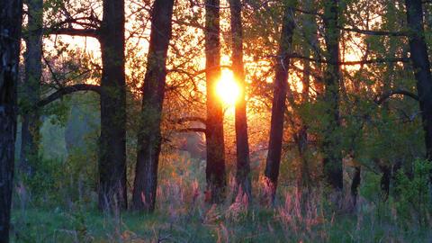 summer forest landscape at sunset, 4k Footage