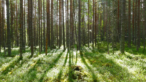 landscape with shadows of trees in forest Footage