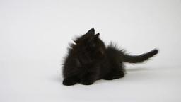 寛ぐ黒猫 Footage