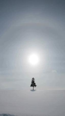 一本の木と日暈 影片素材