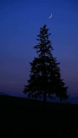 三日月とクリスマスツリーの木 Footage