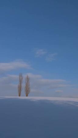 青空とポプラ Footage
