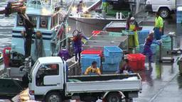 水揚げする漁船と漁港 Footage