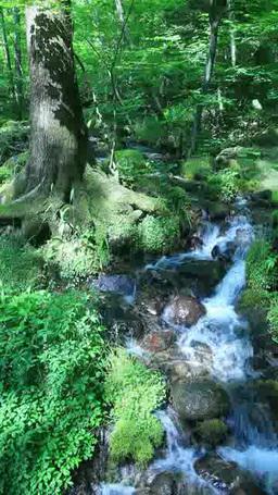 尚仁沢湧水と新緑の樹林 Footage