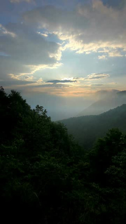 雲海と流れ動く雲と朝日と新緑の樹林 영상물