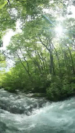 新緑の三乱の流れと木もれ日 영상물