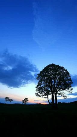 木立と朝日と流れる雲 影片素材