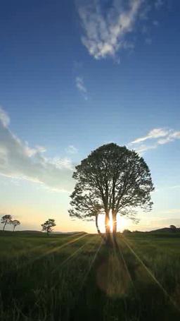 牧草地と木立と朝日 影片素材