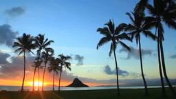 朝日の光芒とヤシの木と海とチャイナマンズハット Footage