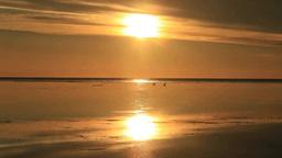 水鏡の海と朝日とアオサギ Footage