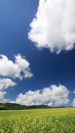 菜の花畑の丘と流れ動く雲 ภาพวิดีโอ