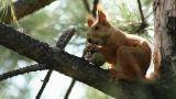 Squirrel 1 Footage