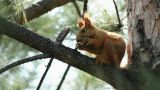 Squirrel 3 stock footage