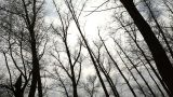 Clouds Behind The Trees In The Forest stock footage
