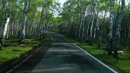 新緑の白樺林の走行 朝 Footage