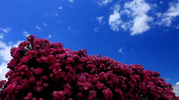 Clouds Over A Garden Of Roses stock footage
