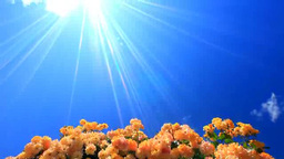 Sun Glowing Over An Arch Of Roses stock footage
