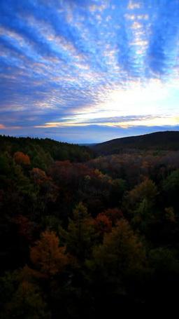 紅葉の樹林と流れる朝焼けのうろこ雲と朝日,微速度撮影 Footage