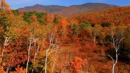Autumn foliage and Mount Yakebitai landscape Footage